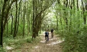 16940-1-bosco-delle-pianelle