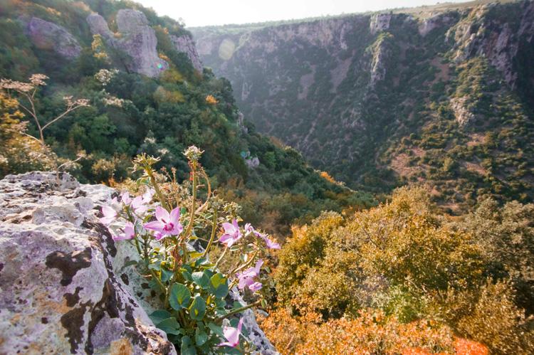 Parco Naturale Terra Delle Gravine Villa Castelli